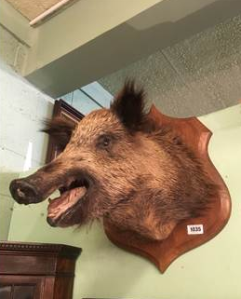 boar-victor-mee-auctions
